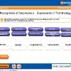 anaphylactic-shock4